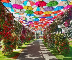 umbrella, colorful, and garden image