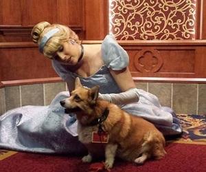 dog, adorable, and disney image