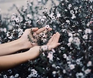 flowers, nature, and hands image