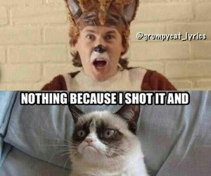 funny and grumpy cat image