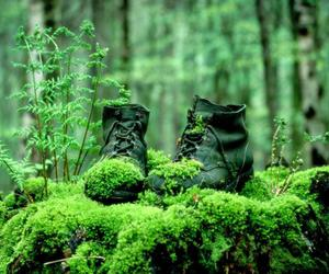 shoes, green, and forest image