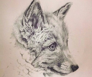 drawing, fox, and cute image
