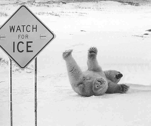 ice, funny, and Polar Bear image