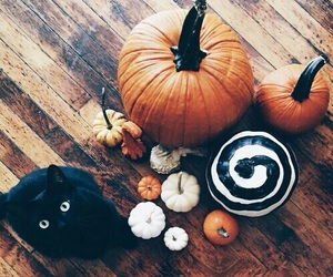 black cat, Halloween, and october image