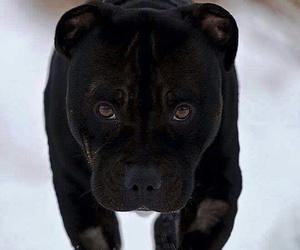 animal, beauty, and black image