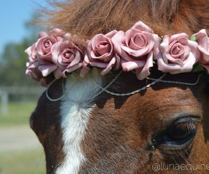 horse, beautiful, and rose image