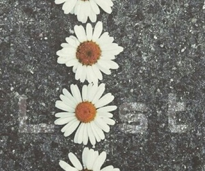 daisy, depressed, and flower image