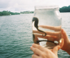 jar, seahorse, and water image