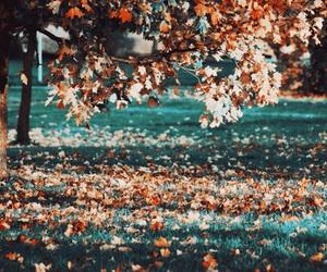 autumn, beautiful, and travel image