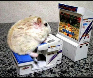 hamster, funny, and game image