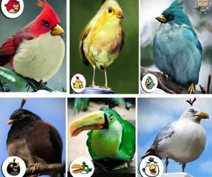 angry birds, bird, and funny image
