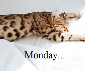 kitten, monday, and quotes image
