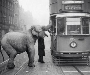 animal, black and white, and elephant image