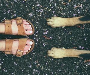 boho, shoes, and dog image