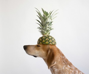 dog and pineapple image