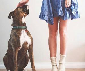 boxer, dog, and dress image