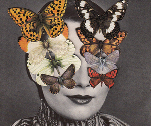 butterfly, archive, and retro image