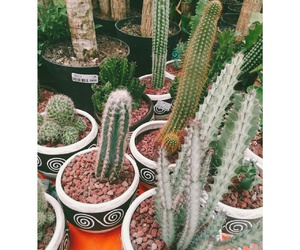 cactus, vintage, and cactuslover image