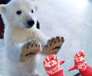 cute, bear, and animal image