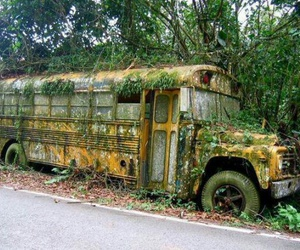 bus, nature, and school bus image
