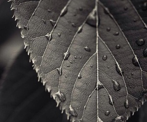 wallpaper, leaves, and quotes image