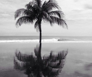 beach, black and white, and palm trees image