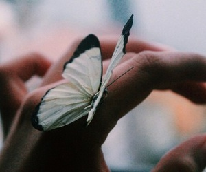 butterfly, photographie, and hand image