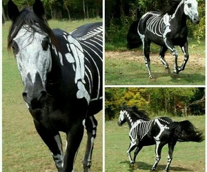 horse, Halloween, and skeleton image