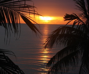 golden, sunset, and tropical image