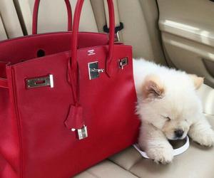 dog, red, and bag image
