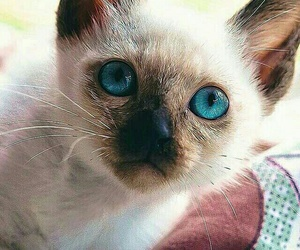 adorable, sweet, and blue eyed image