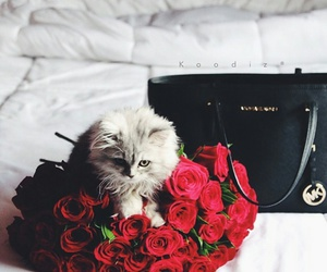 cat, red, and roses image