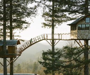 home, tree, and tree house image