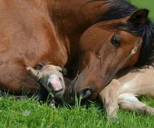 horse, baby, and foal image
