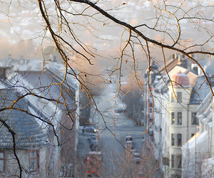 winter, tree, and city image