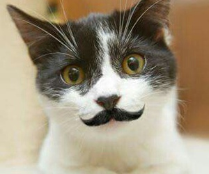 chat and moustaches image