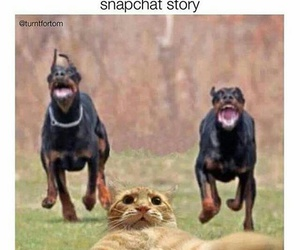 funny, cat, and snapchat image
