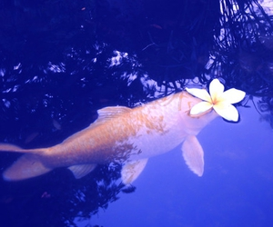 fish, flowers, and water image