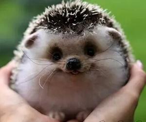 adorable, animal, and sweet image