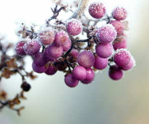 berries, fruit, and plants image