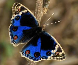 butterfly and insects image