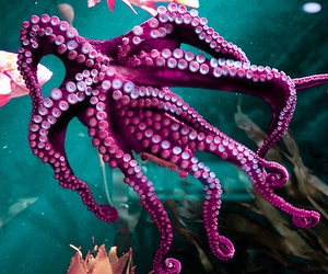 octopus, sea, and purple image