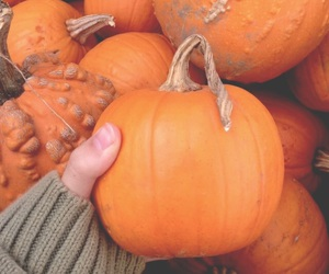 autumn, Halloween, and fall 2015 image