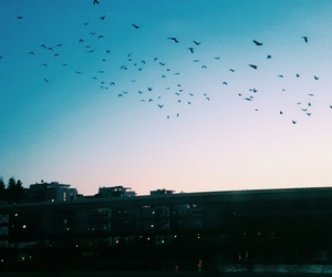 birds, Flying, and sky image