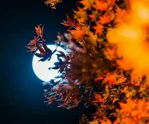 autumn, moon, and fall image