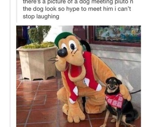 dog, funny, and pluto image