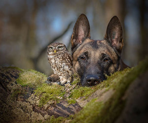 little, sweet, and owl image