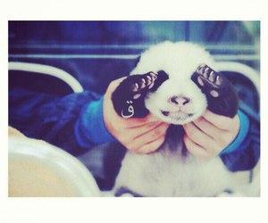 panda and love image