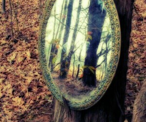 mirror, forest, and tree image