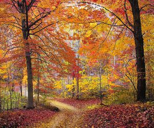autumn, fall colors, and leaves image
